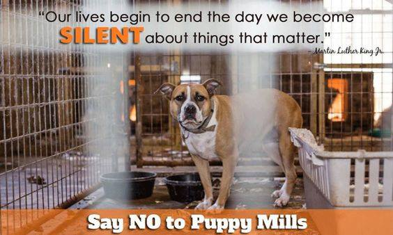 No more puppy mills